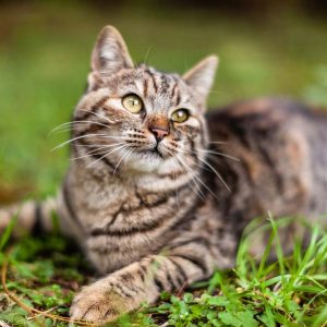 Ipertiroidismo nel gatto: cos'è e come si cura?