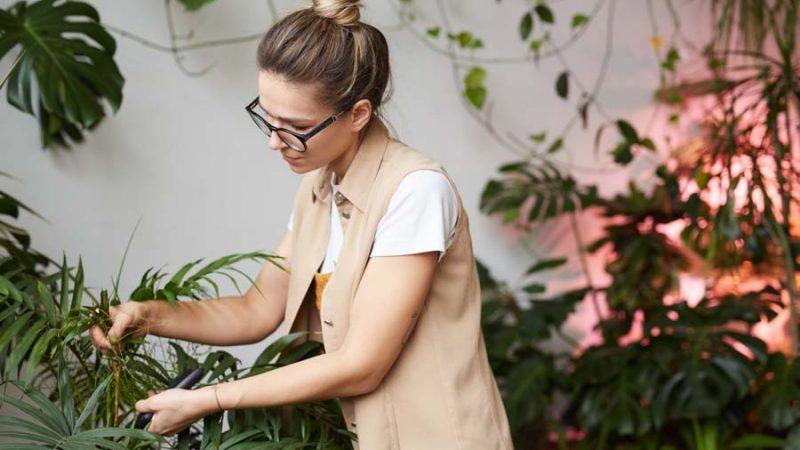 Acquista le più belle piante a Milano: ecco il servizio che fa per te