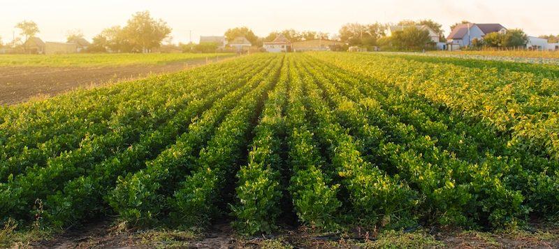 Azienda agricola a Ogliastra, ecco a chi rivolgersi